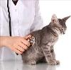 Ветеринарные клиники в Барнауле